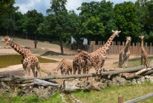 Zoo_Brno